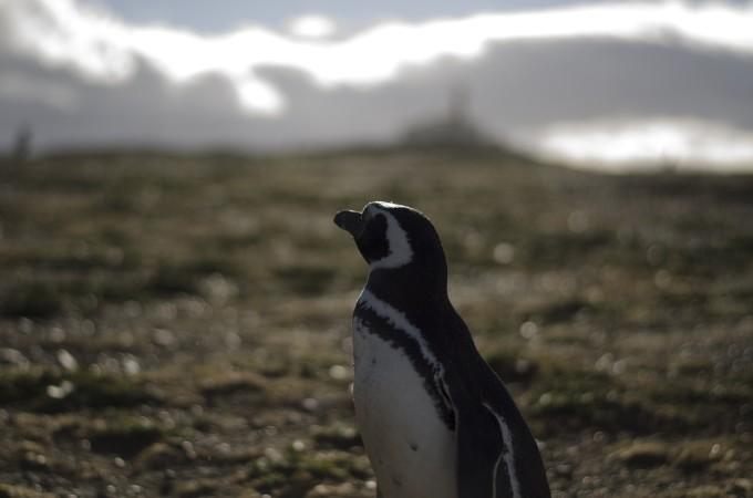 penguin-963700_1920